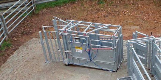 Cage Jourdain pour traitement des vaches